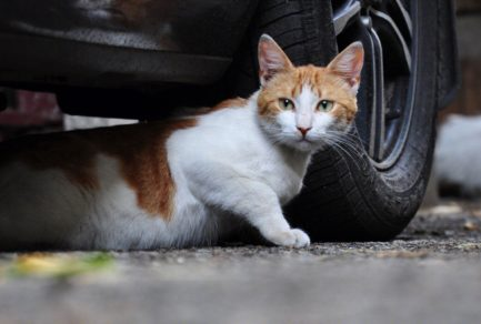 JD and Whiskas Help Homeless Cats Weather the Winter